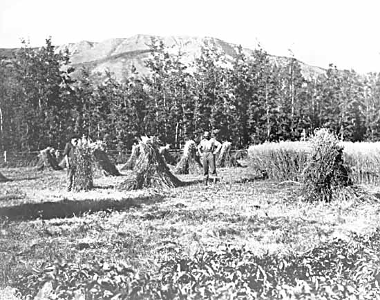 VPL #12465, Leonard Frank, no date, men in field at harvest time in Peace River